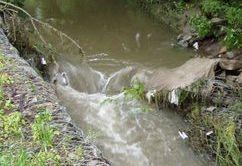 Lesz-e még élet a patakban kép3